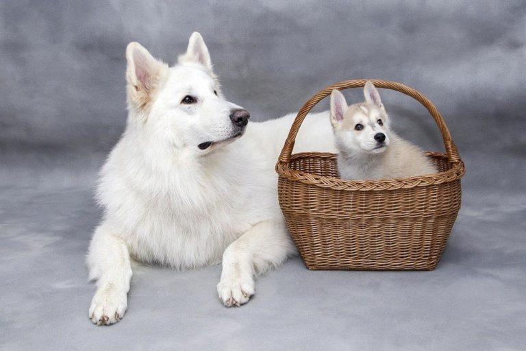 Profesjonaliści trzymają przed tobą te wskazówki dla psów